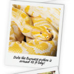 A Zookeeper's Diary – Reptiles – AWCP