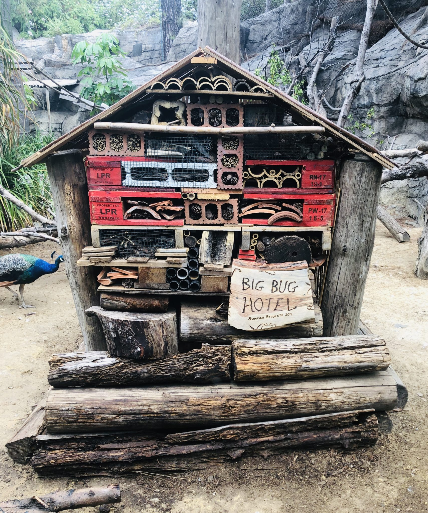 Bug Hotel created by Summer Students 2019